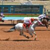 Eighteen State-Bred Sophomores Entered in New Mexico Cup Derby Trials