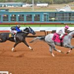 Fastest Qualifier Mr Innovator Draws Post 9 for $280,371 Mountain Top QH Futurity